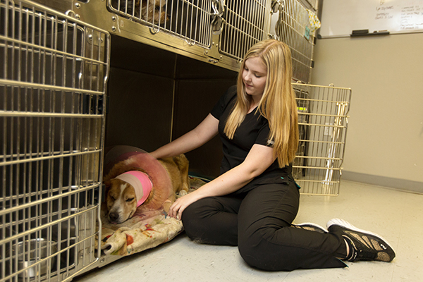 Surgery Services - Animal Medical Center of Tyler