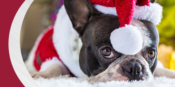 Holiday Pet Tips | Animal Medical Center of Tyler