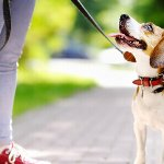 New Year's Resolutions to Improve Your Pet's Health