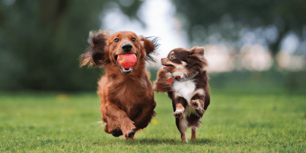 Catch-Up on Your Pets Flea and Tick Prevention